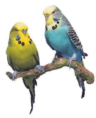 http://casbirds.weebly.com/uploads/2/7/7/0/2770063/9505953.jpg?328x398
