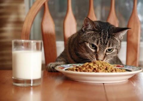 La alimentación para gatos
