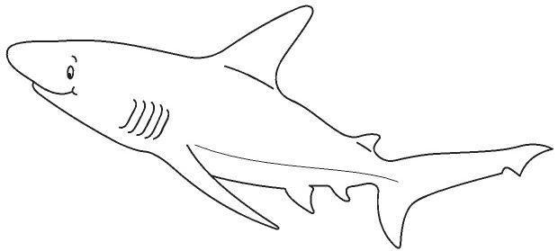 animales marinos07