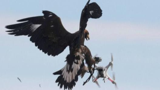 France recruits eagles to take down drones | CGI Animation and Gaming