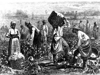 cotton_picking.jpg (325×244)
