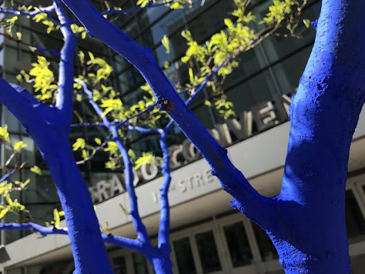 Artist turns Denver's trees blue to raise awareness about deforestation
