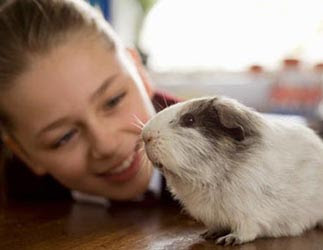 Girl and a guinea pig.