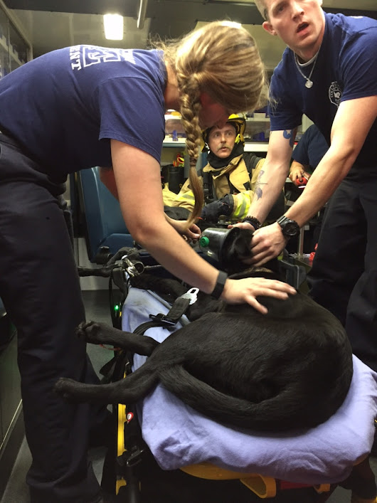 CSFD saves two dogs in apartment fire