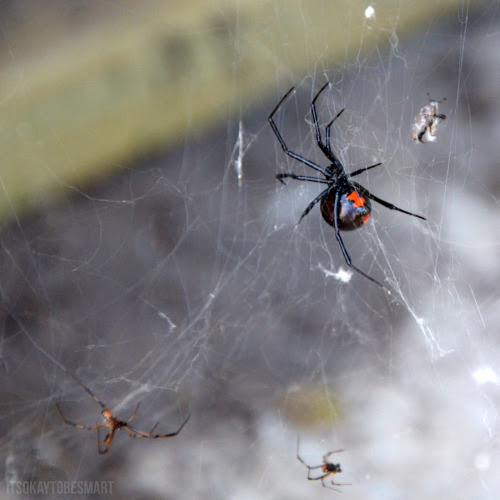 It's Okay To Be Smart • This is not the black widow that bit me.  The...