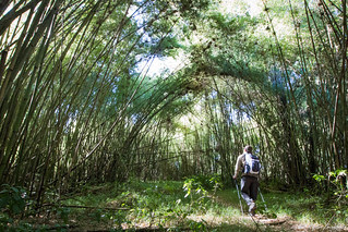 Walking Through The Bamboo Forest