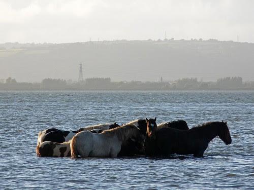 22389 - Penclawdd Ponies