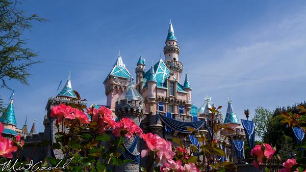 Disneyland Resort, Disneyland, Sleeping, Beauty, Castle, Flower, Rose