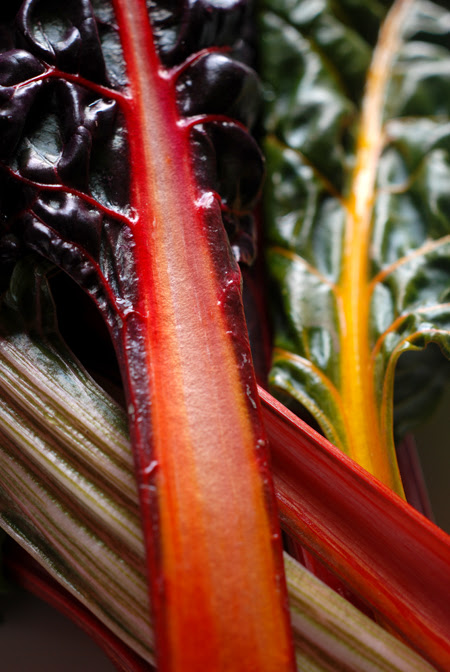 rainbow chard© by Haalo