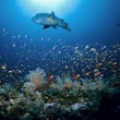 World Oceans Day: Why it Should Matter to All of Us | Wildlife Research & Conservation