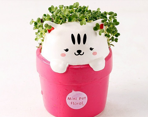 kitty flower pot