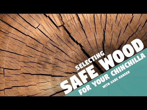 Safe wood for chinchilla cages - Diy chinchilla cage accessories