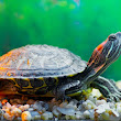 9 Things to Know About Turtles as Pets
