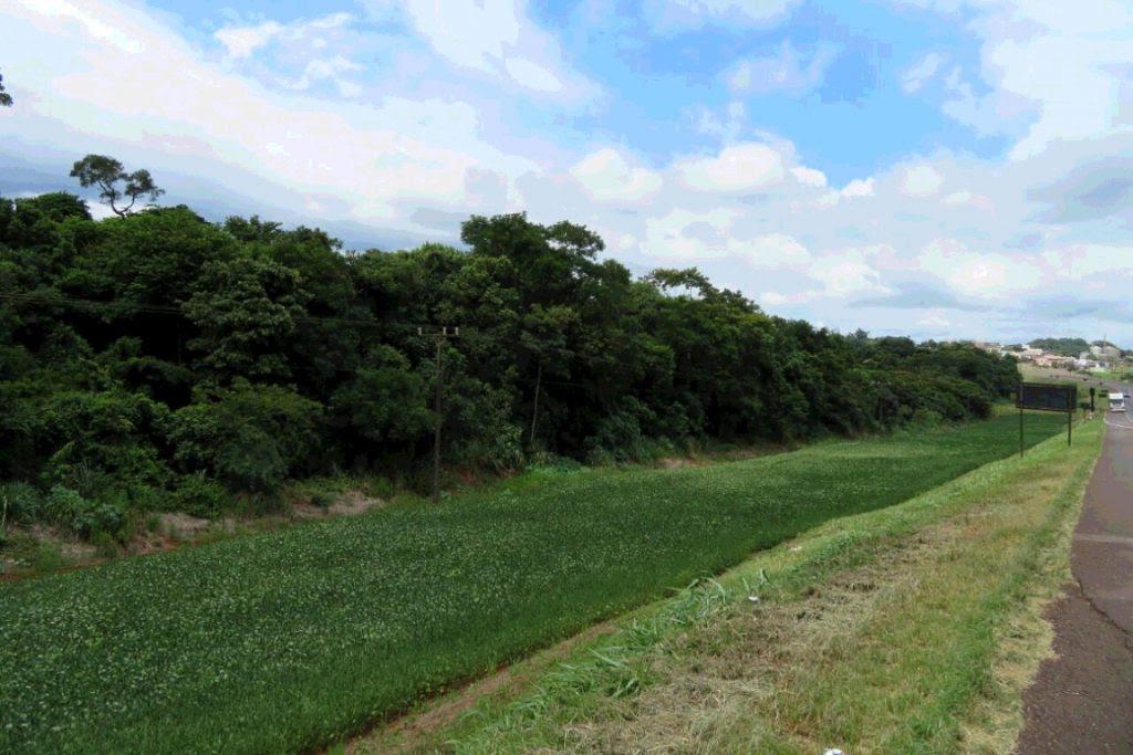 Rodovia BR 277, que margeia o Parque Nacional do Iguaçu: plantação de soja se estende por mais de 30 km. Foto: Lindamir Monteiro da Silva.