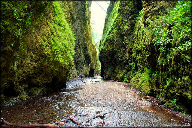 The start of Oneonta Gorge just after crossing the log jam