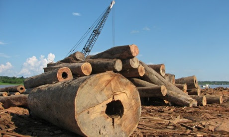 fresh timber peru