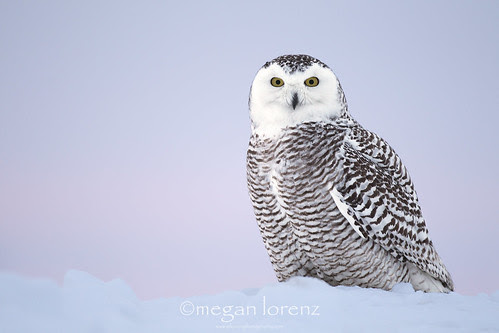 I think I was being watched ;-) by Megan Lorenz