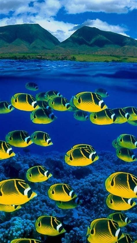 Fish hawaii islands tropical bing split view sea wallpaper