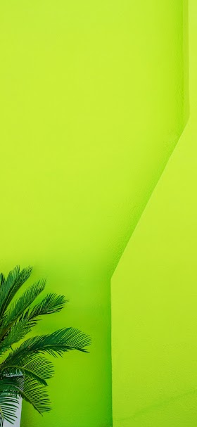 Green palm tree wallpaper