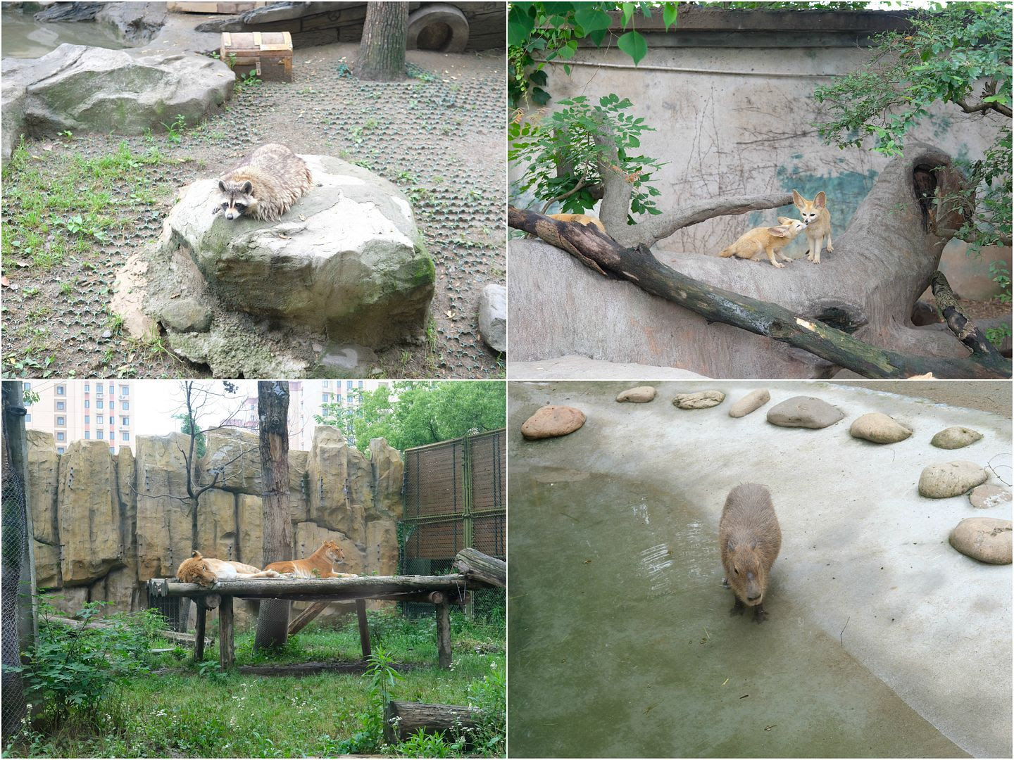 photo shanghai wildlife animal park pudong.jpg