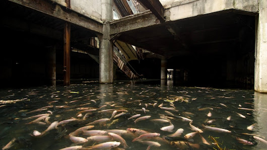 Abandoned mall in Bangkok has been overtaken by fish