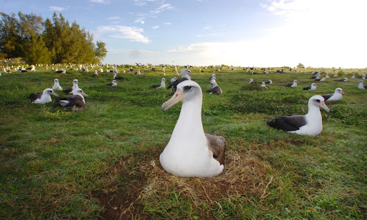 When I'm sixty-four: world's oldest tracked bird returns to refuge with mate