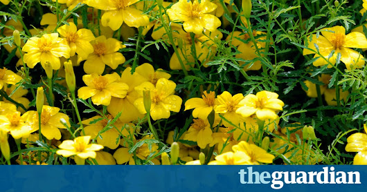 How to get your garden ready for spring | Life and style | The Guardian