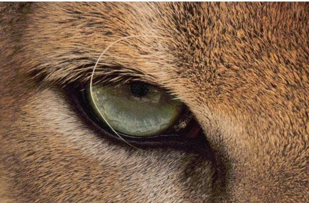 The Riddle of the Day: Who These Eyes Belong To? (25 pics)