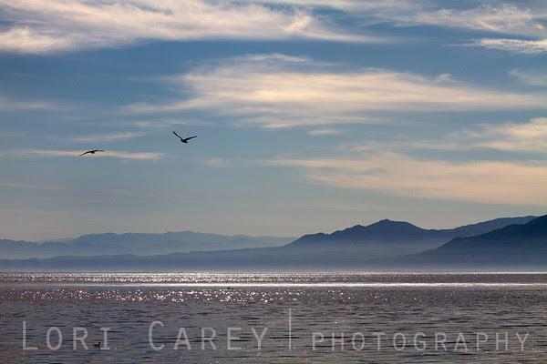 Salton Sea Mist