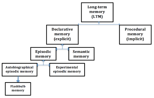Episodic, Procedural and Semantic Memory | Psychology | tutor2u