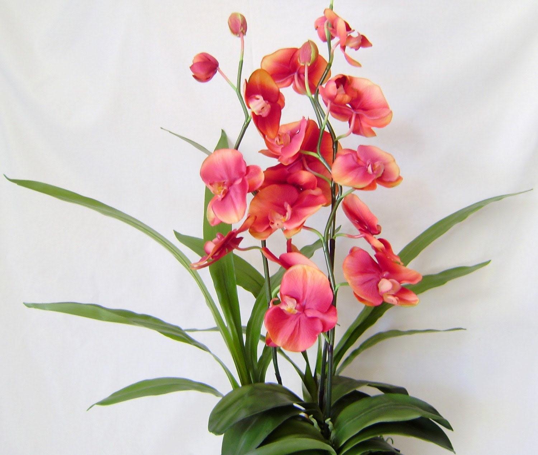 Scented Silk Orchid - Sunset Orange Phalaenopsis