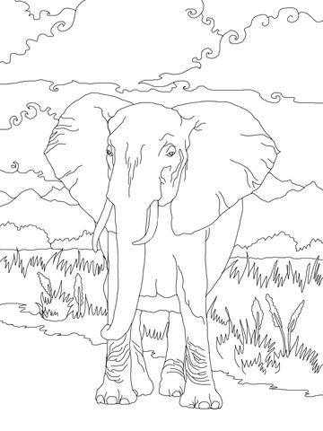 13 new ausmalbilder mandala für erwachsene elefant