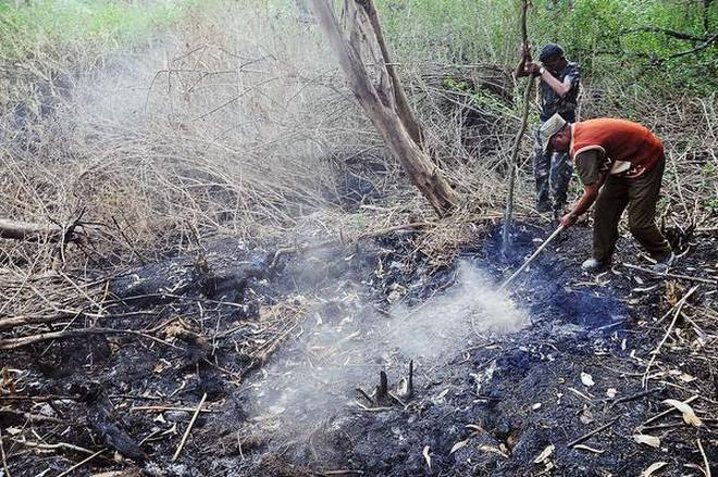 mysterious plume swamp india, smoking swamp india, mysterious smoke coming out of a swamp in India, msterious smoking swamp india