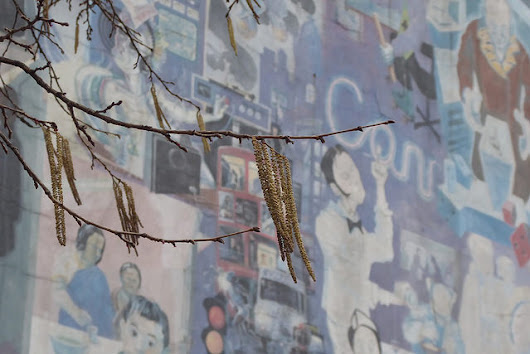 Catkins blossom on a hazel tree next to the Fitzrovia Mural at Whitfield Gardens