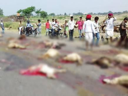ट्रक के चपेट में आकर 50 भेड़ों की मौत