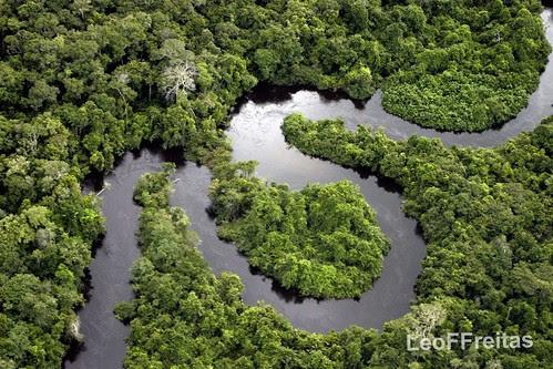 Floresta Amazônica, até quando? / Amazonian Forest, until when? / Amazona Arbaro, ĝis kiam? by Leonardo F. Freitas (LeoFFreitas)