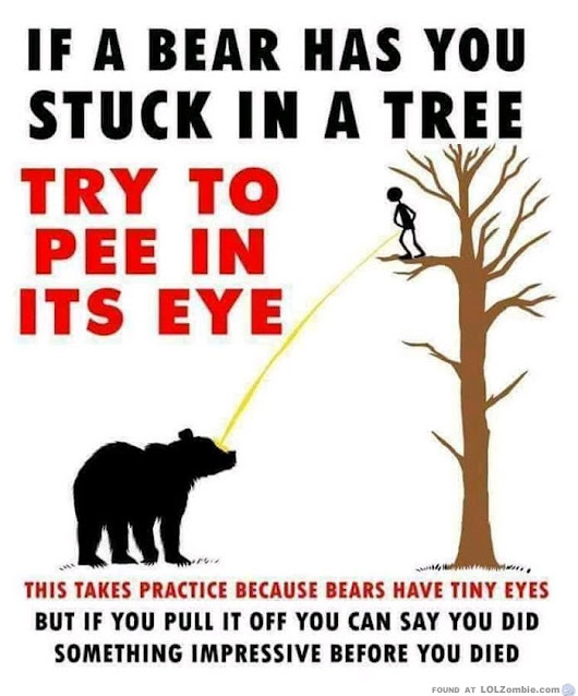 If a bear has you stuck in a tree, try to pee in it's eye.