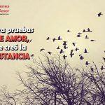 5 Imagenes Con Frases De Amor Para Mi Novio Gratis