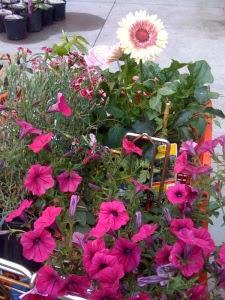 My flower filled cart at the garden shop