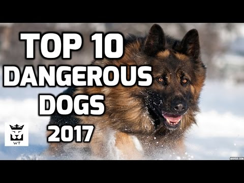 Top 10 Most Dangerous Dogs Breeds