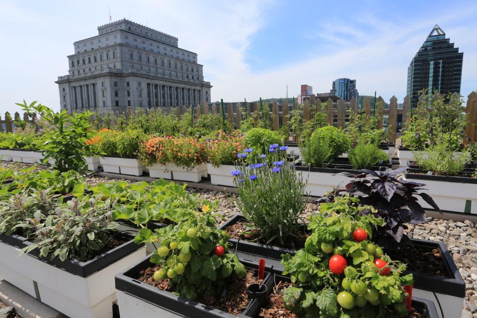 CI_fairmont rooftop garden montreal 6fbf6a8e0000