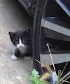 Una gatita que apareció de pronto en su patio trasero regresa a su casa en busca de ayuda