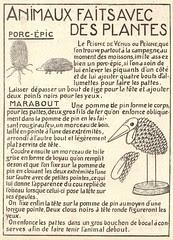 animaux plantes
