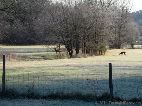 Frosty morning view through the kitchen window - FarmgirlFare.com