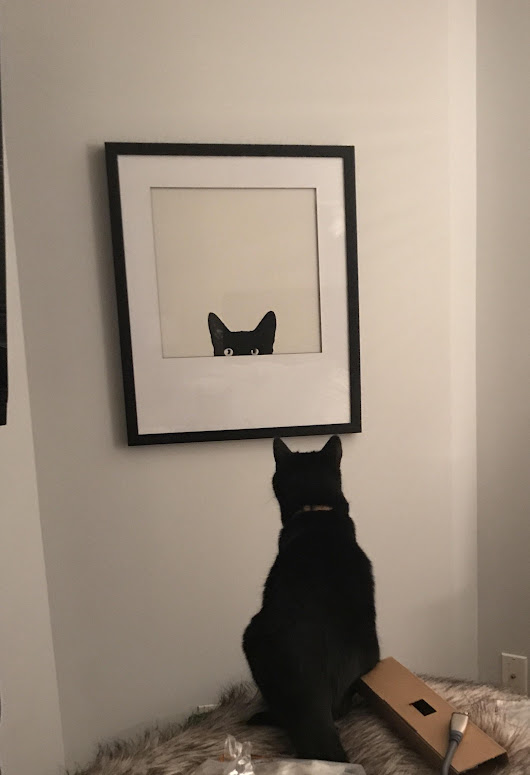 Our cat is very confused with our new picture. |