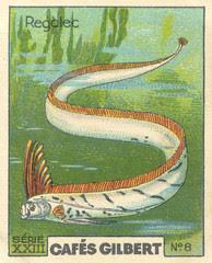 gilbert poissons 8
