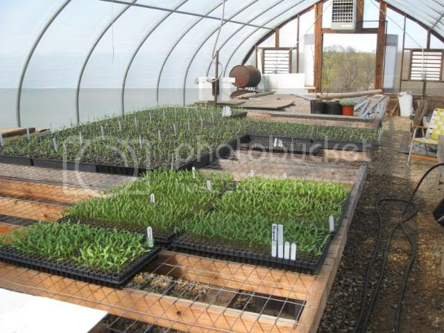 greenhouse bench's
