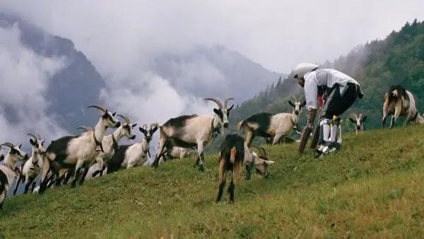 600x338xThomas-Thwaites-goat4-600x338_jpg_pagespeed_ic_iQR2rSZHJj