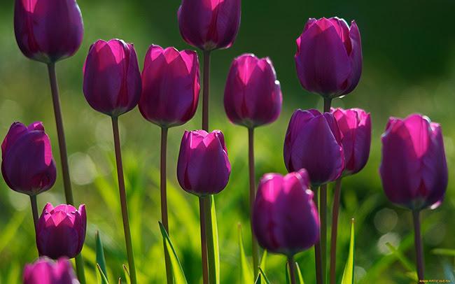 Flores para dar cor, alma, vida à Vida