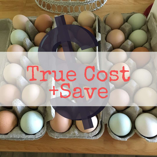 Eggs, True Cost of Homegrown, How I Slashed Feed bill by 66%